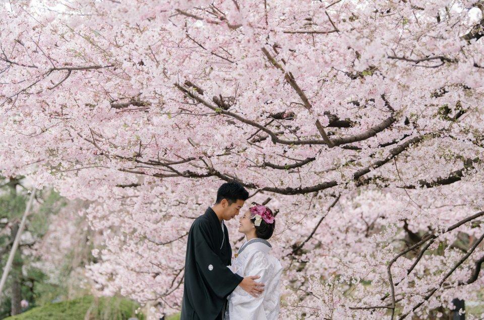 和装前撮り撮影 – 都内・桜 –